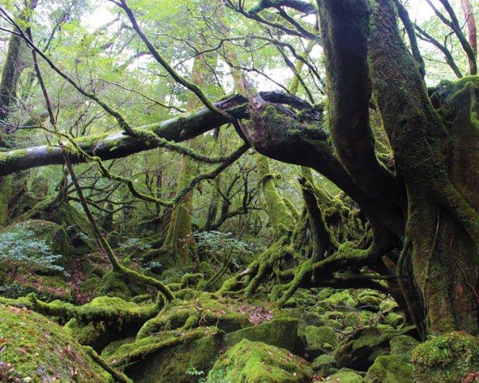 もののけ姫のモデルにも!ユネスコ世界自然遺産「屋久島」観光の魅力を現地からお届け