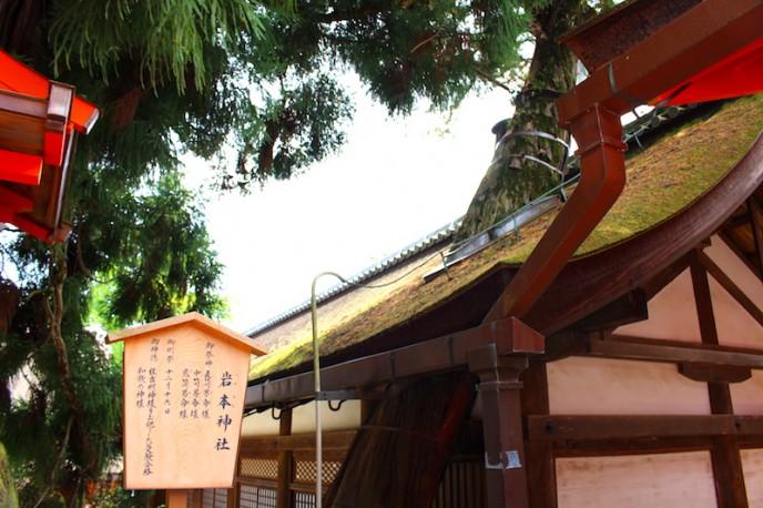 木を残すために屋根に穴を開けてあります