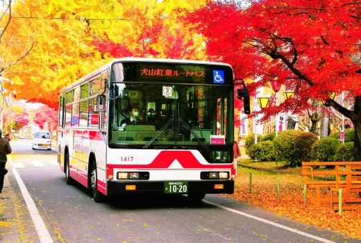 koto-bus-520x350