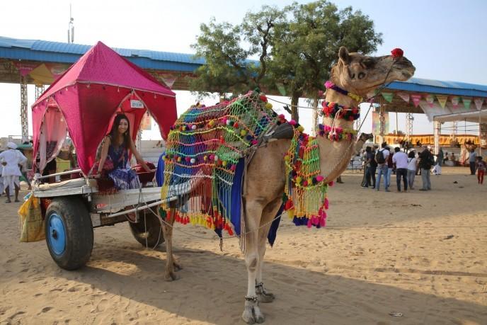 【インドの砂漠で野宿した】砂漠に取り残された夜と10万頭のラクダフェスティバル