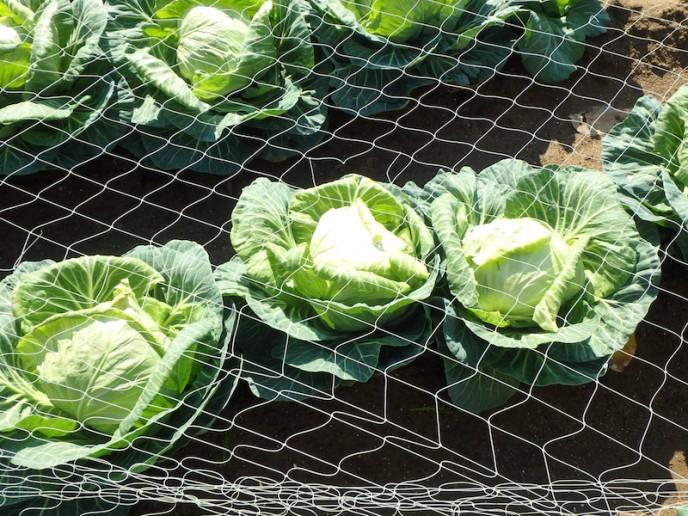 そういえば今年の1月〜2月は野菜の値段が高騰してましたね……