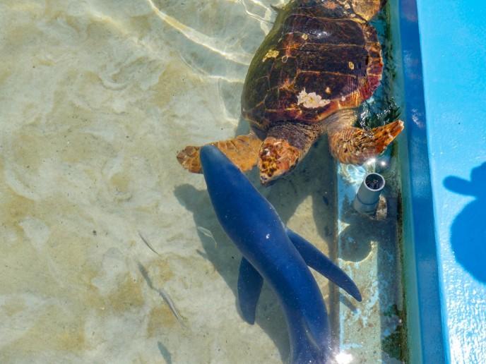 小学校のプールにサメが!?Twitterでバズった「むろと廃校水族館」に行ってきた
