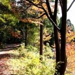 毎週高尾山に行く夫がおすすめする「裏高尾」の通な楽しみ方!