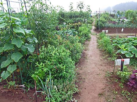 「都市農地の貸借の円滑化に関する法律」が国会を通る