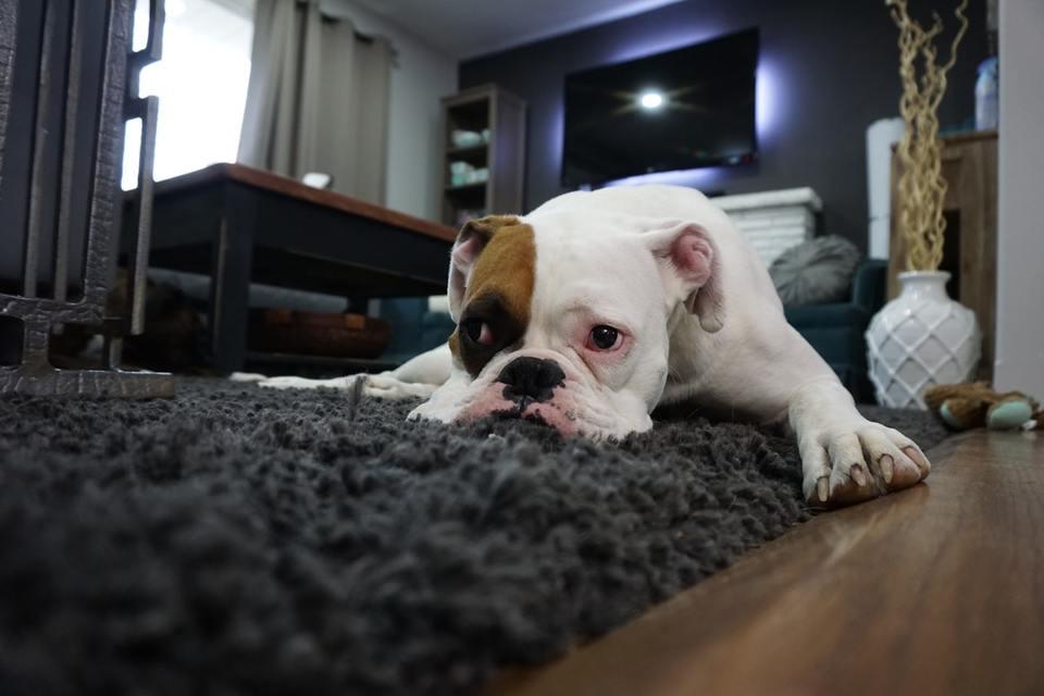 床暖房に対応したおすすめラグ5選!ラグは必要?効果は?