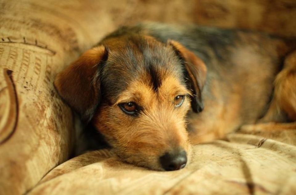 犬もこたつが好き!犬がこたつにもぐる/寝る時の危険性や注意点を解説