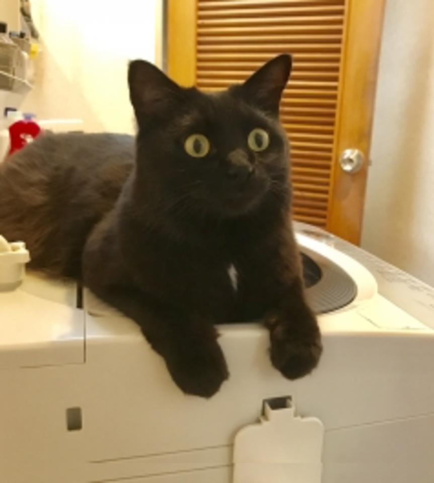 本当におすすめの洗濯機20選!おすすめの理由と共にご紹介!