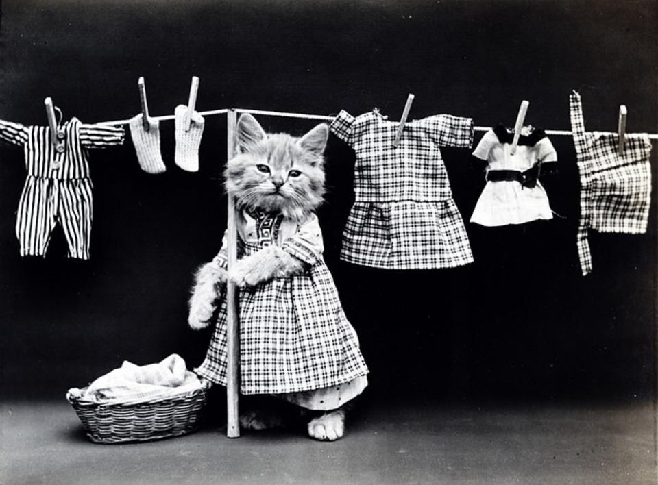 洗濯機でのドライ機能でハウスクリーニングをしよう!
