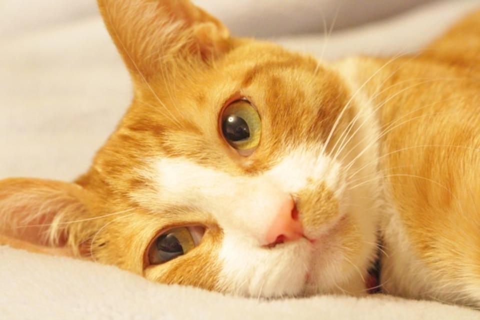 猫アレルギー対策に空気清浄機は有効?おすすめの空気清浄機とは?