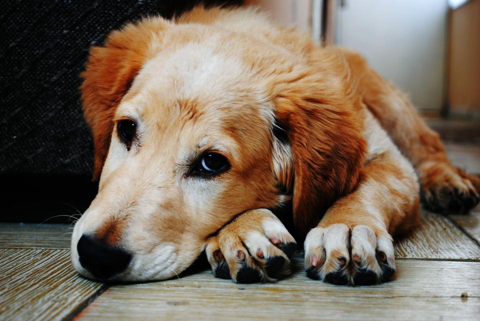 夏に留守番の犬に扇風機の熱中症対策は意味ない!危険な理由と暑さ対策
