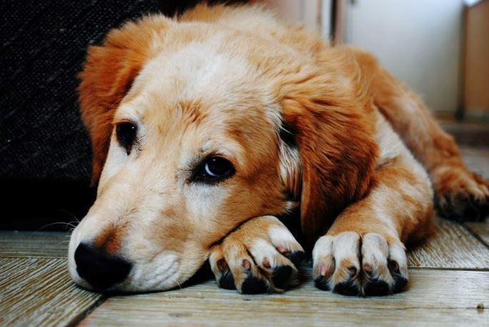 犬 熱中症 危険性
