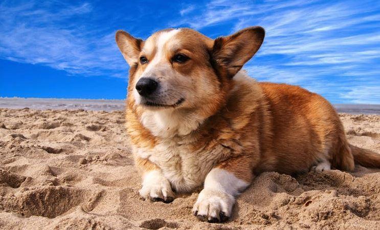 犬 熱中症 対策