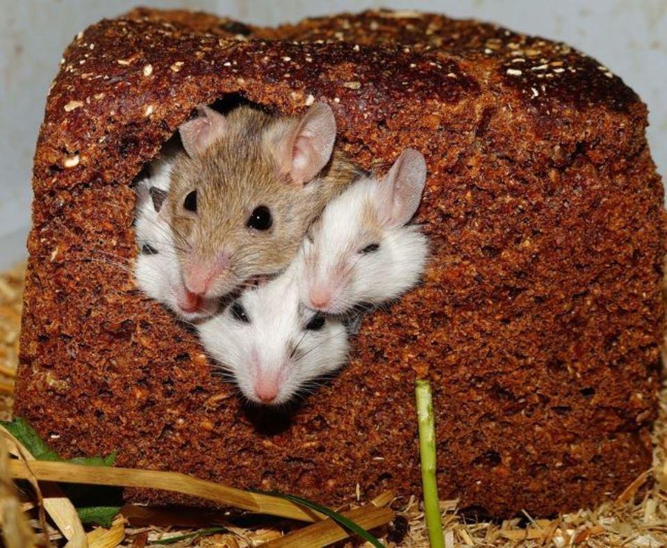 マウスパッド 代用