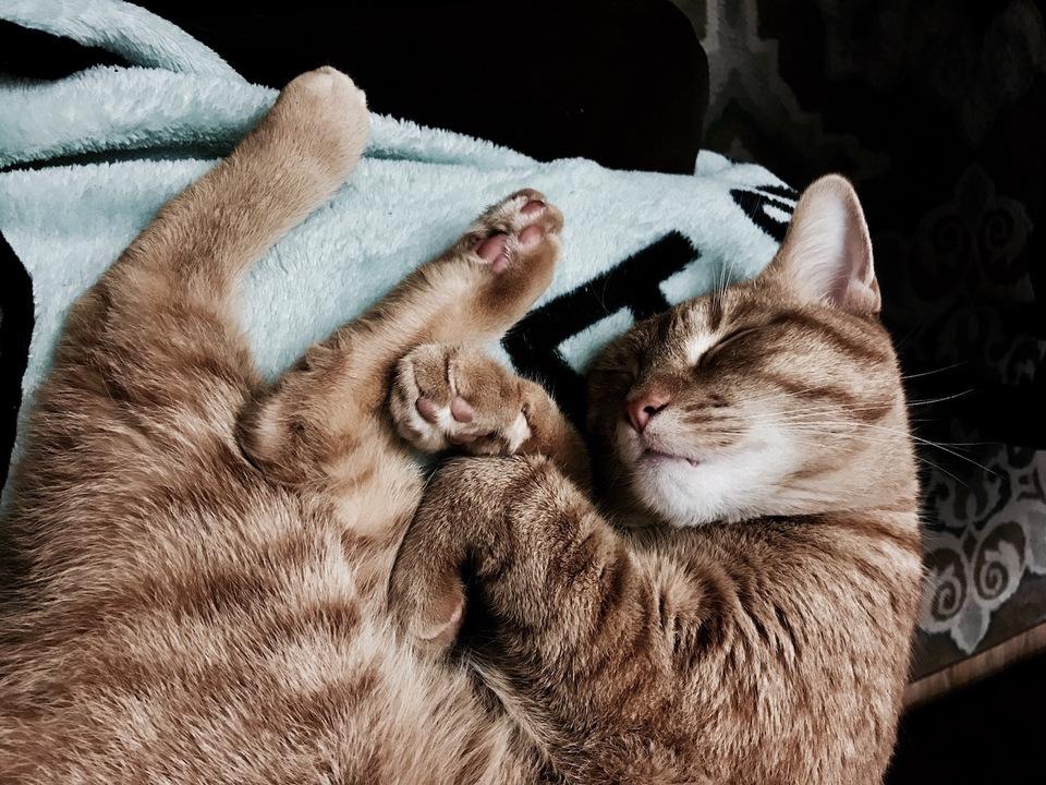 空気清浄機 猫