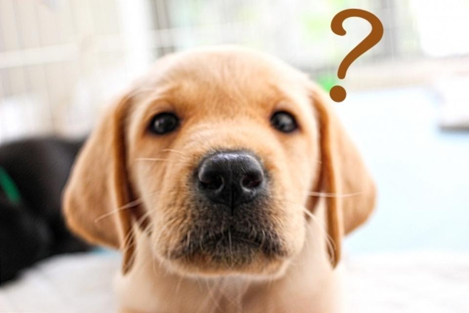 床暖房 後付け ペット 犬 質問 疑問