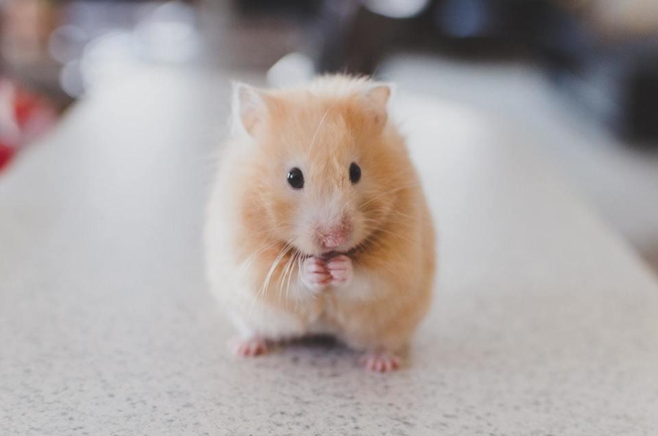 マウス が 動か ない