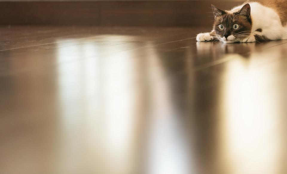 床 フローリング 猫