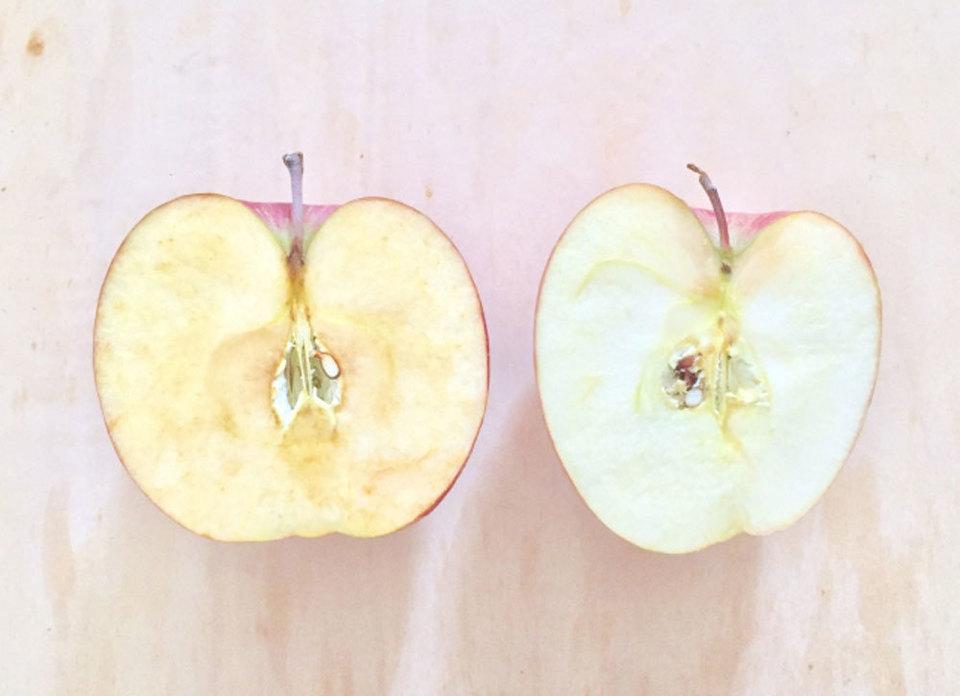 りんご 冷蔵庫