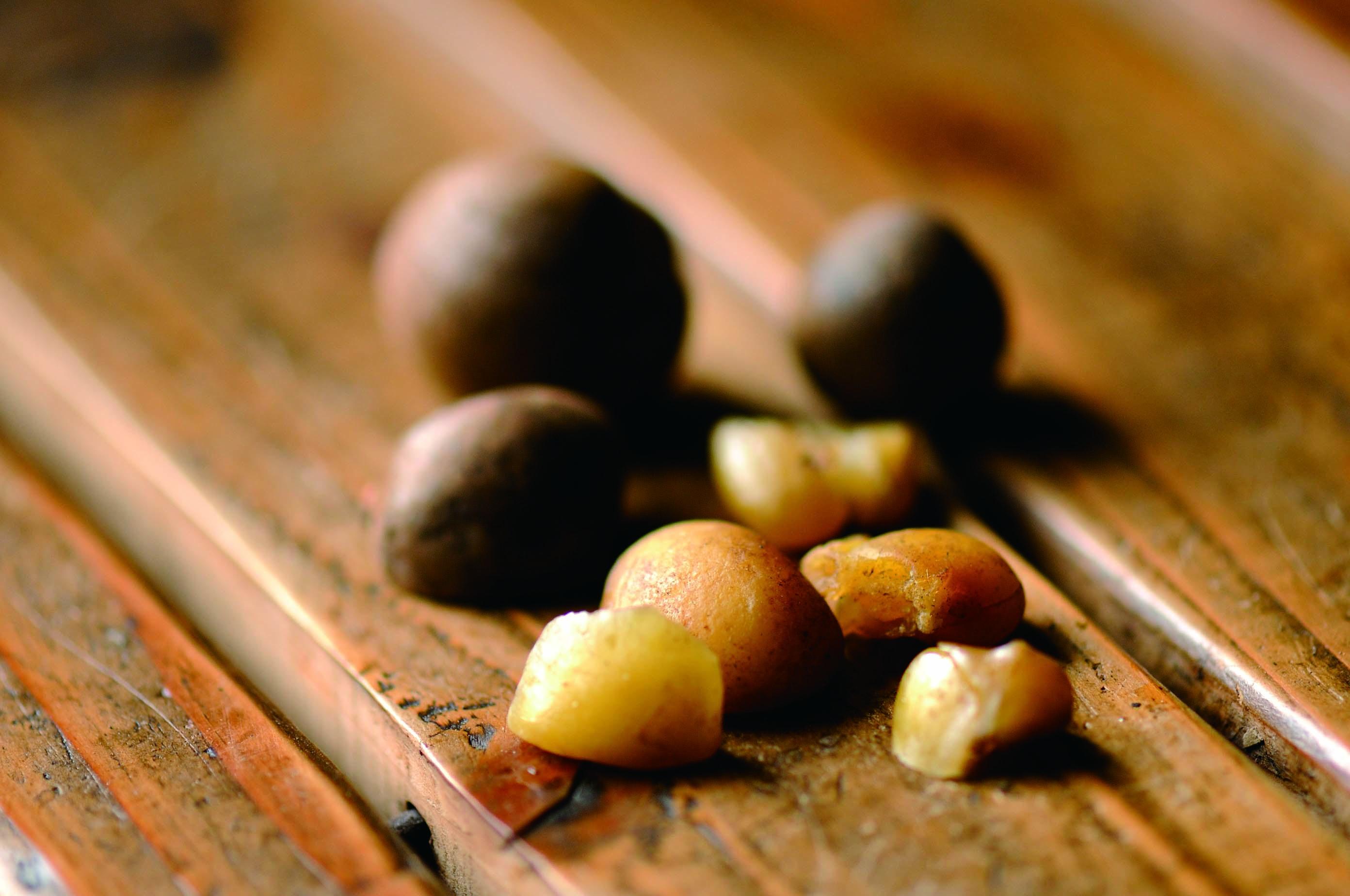 お取り寄せ通販・スキンケアに人気の鹿児島桜島産の椿油(つばきオイル)
