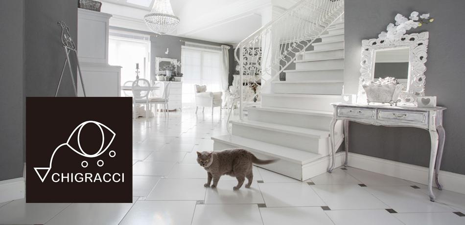 Horizontal view of cat in luxury interior