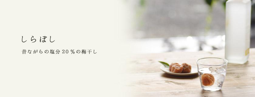 matsumoto12