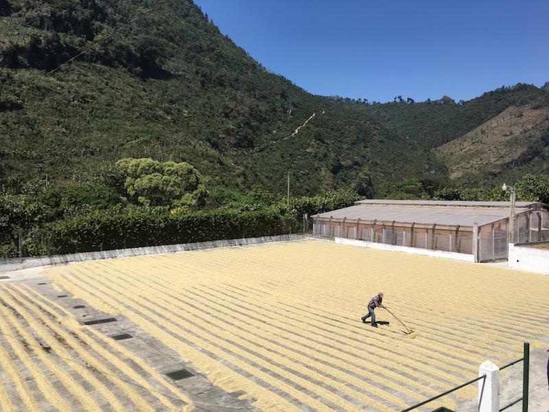 グァテマラのエル インヘルト農園。