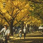 '渋谷区'