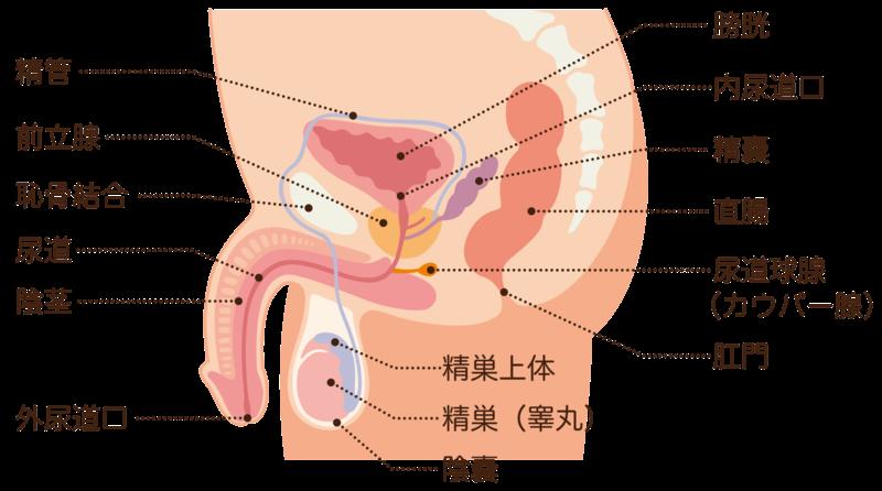 前立腺 癌