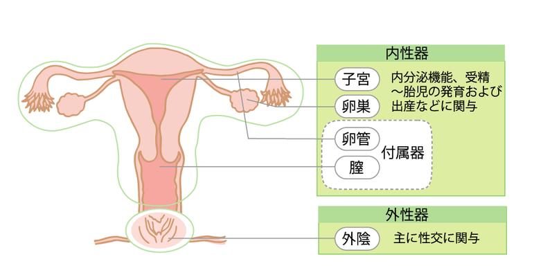 症候群 性 卵巣 多 ピル 嚢胞