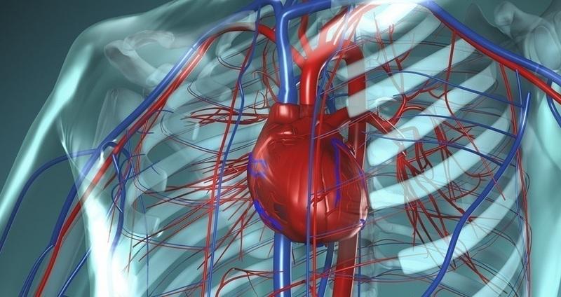人工心臓はどのようなものか。置...