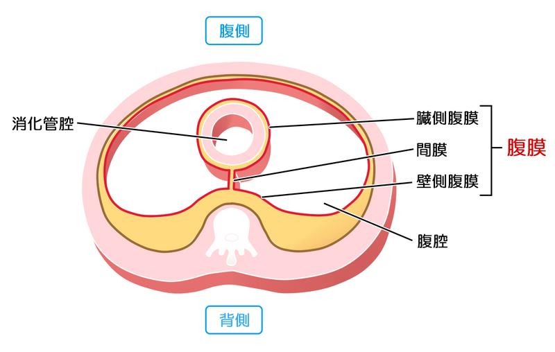大腸がんに伴う腹膜播種――症状や治療法は? | メディカルノート