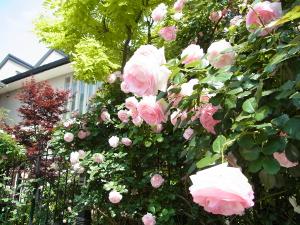 株式会社リャマオフィス/新築住宅の庭をつくる設計・施工(現場に出て施工管理業務まで行うかは各自の希望次第です)