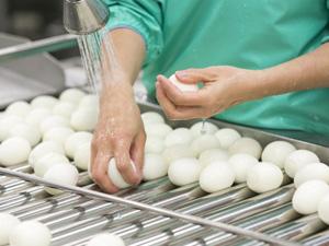 三州エッグ株式会社/食品メーカーの製造スタッフ(日本の食文化を支える鶏卵のニッチメーカー/未経験スタートOK)