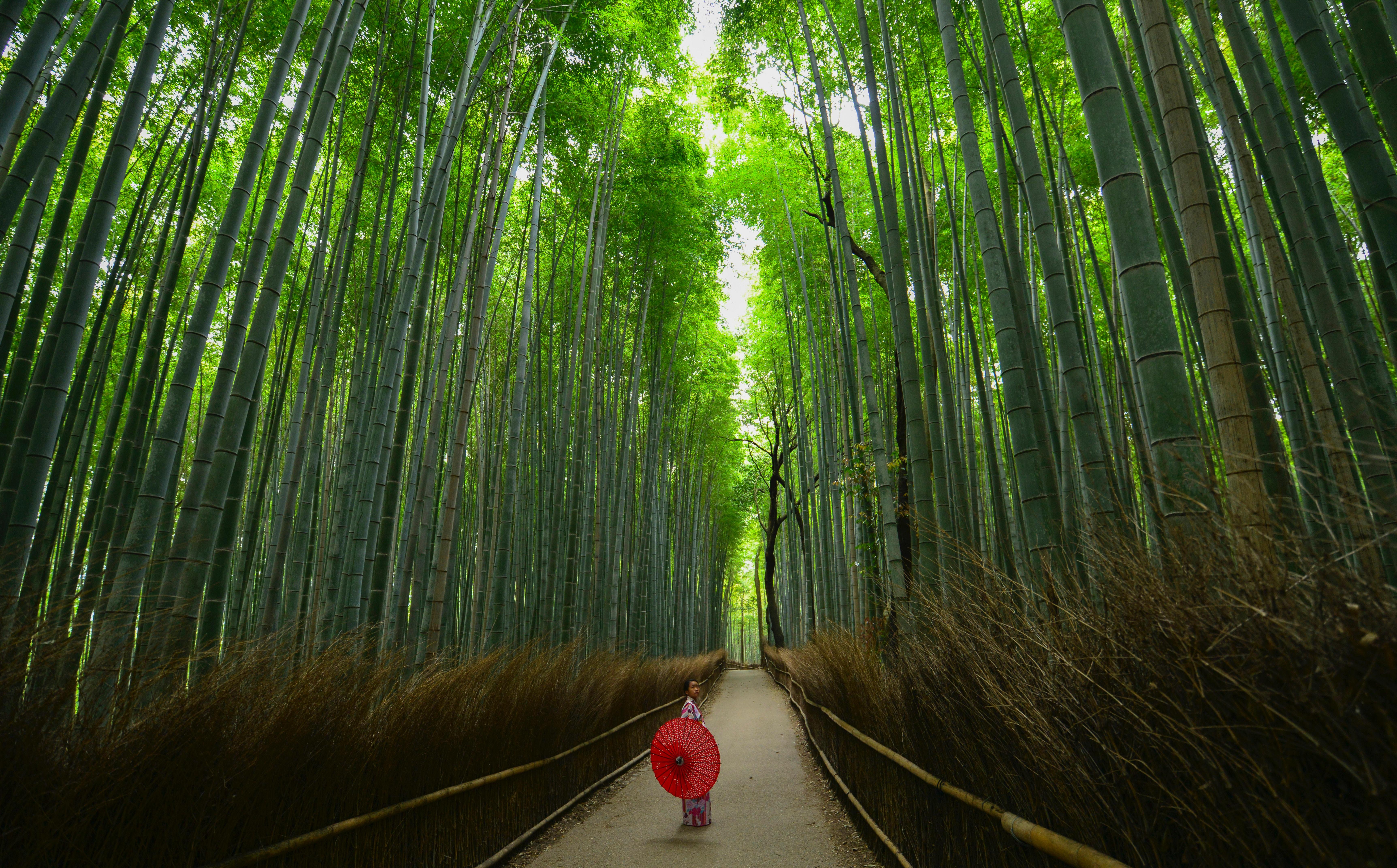 竹林の小径(嵐山)