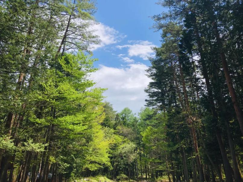 天気が良ければ最高の森林浴をお楽しみいただけます