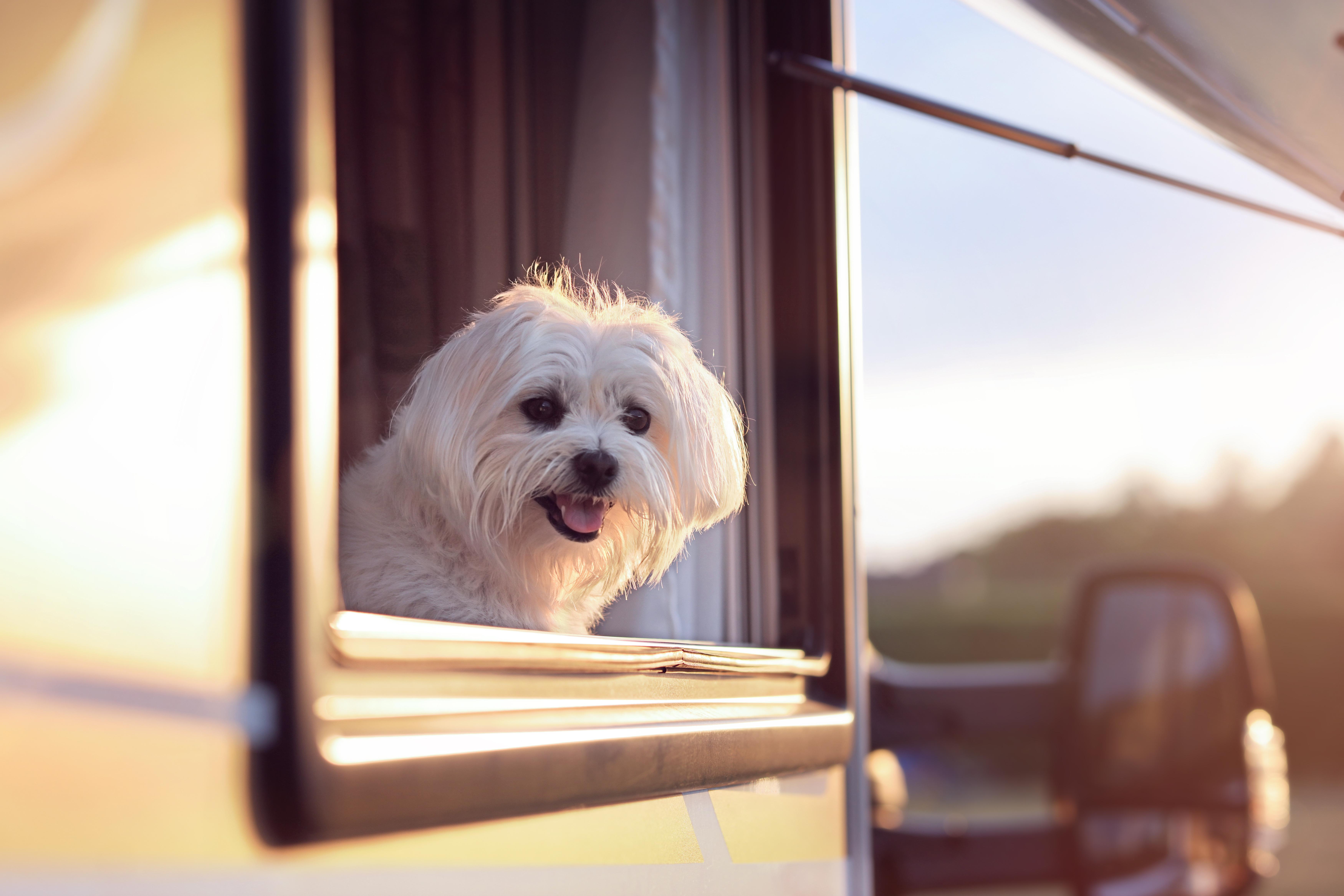 愛するペットと一緒にキャンピングカー旅!おすすめ車両とドッグラン付き車中泊スポット4選(関東編)