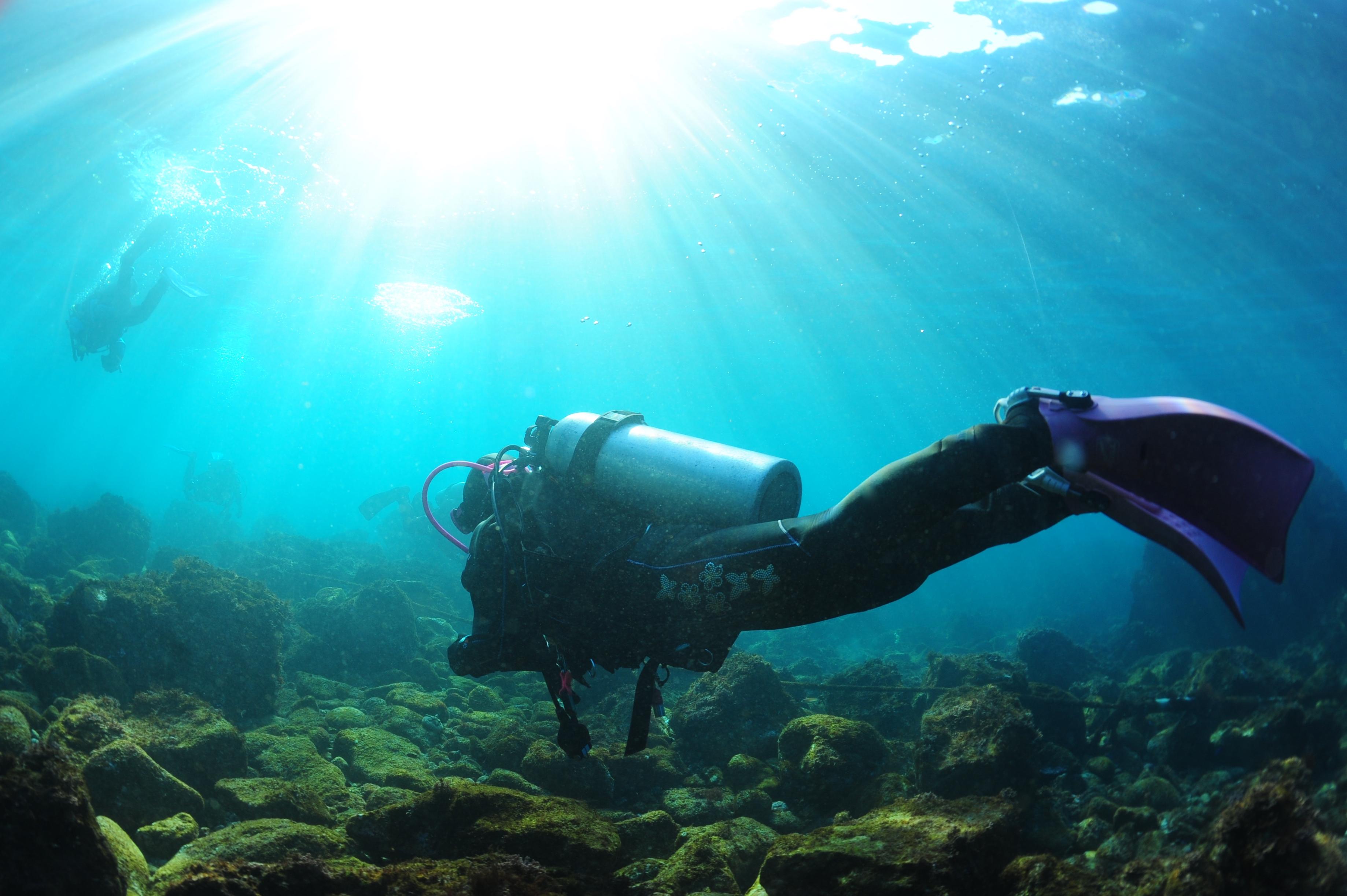 伊豆の海中世界を初めて体験できます。体験ダイビング(要予約)
