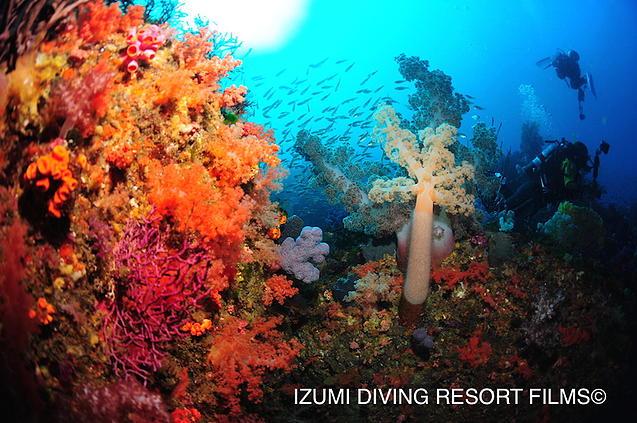 伊豆の海中世界を初めて体験できます。体験ダイビング(事前予約、現地精算)当社は伊豆のダイビングショップなのです!