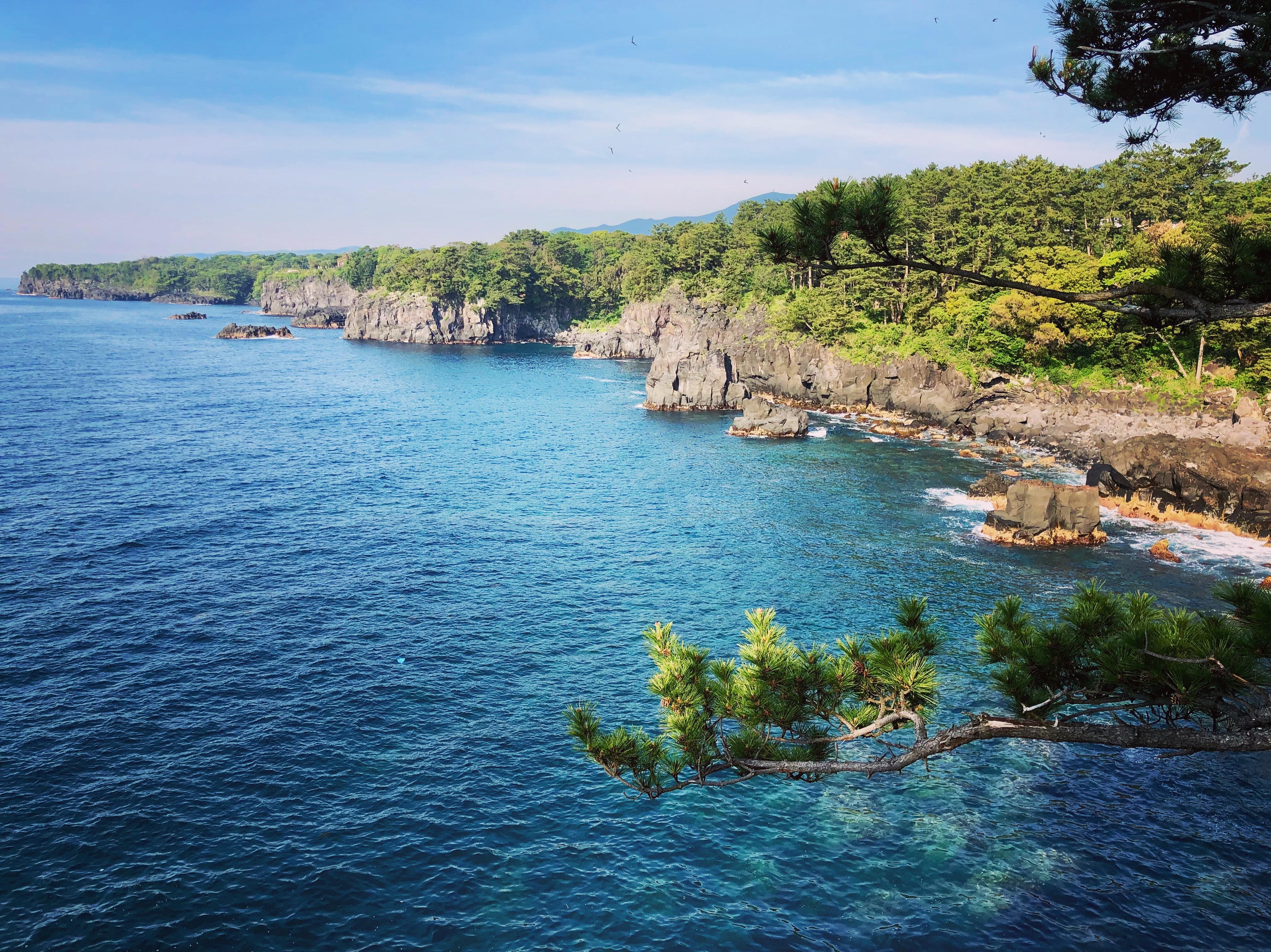 キャンプ場から南に7キロもこのような海岸線が続きます。「城ヶ崎自然研究路 ピクにカルコース」で検索してください!ぜひこの素晴らしい城ヶ崎海岸を知ってください!