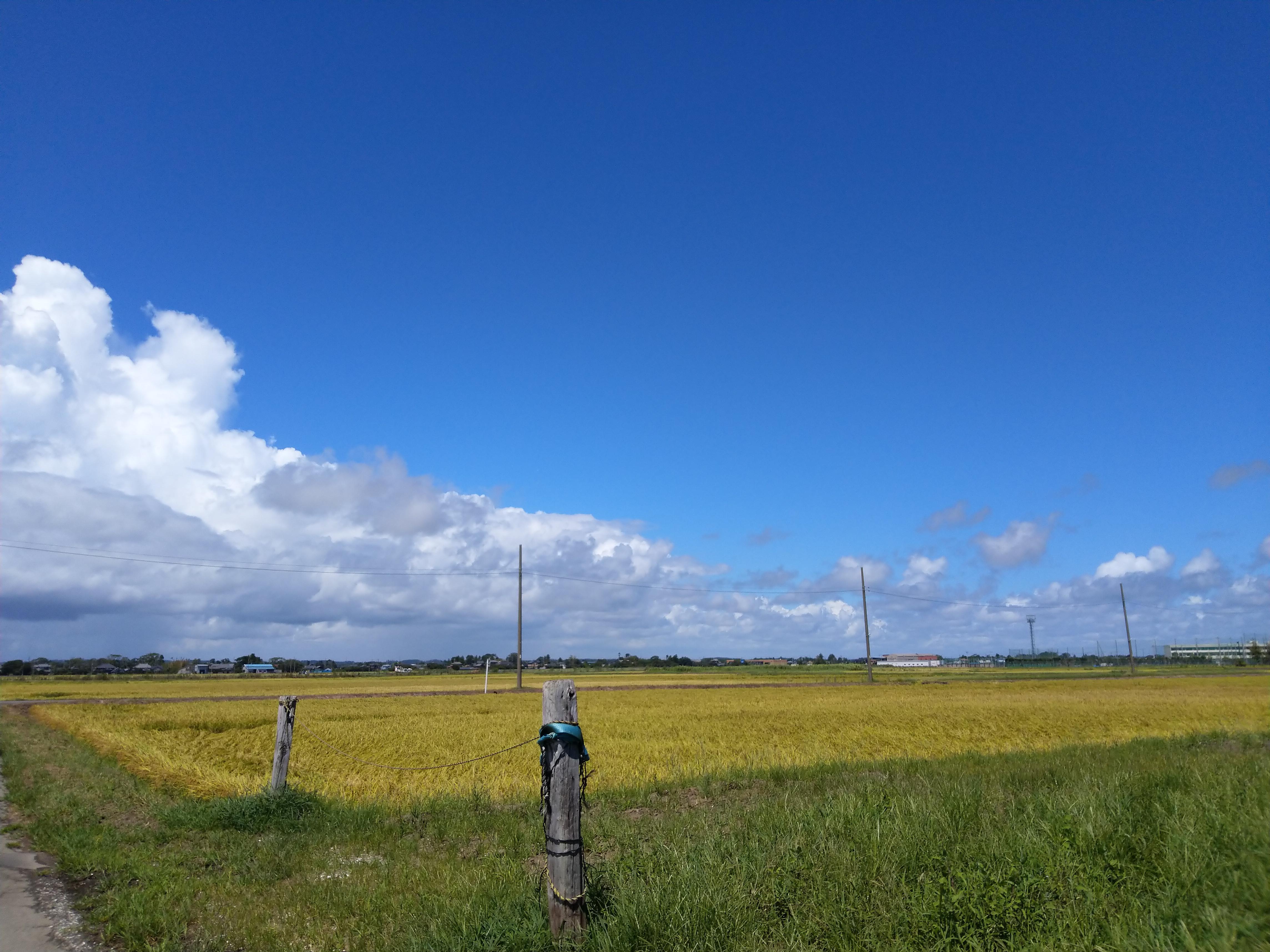 広々とした田んぼの風景(夏の終わり)