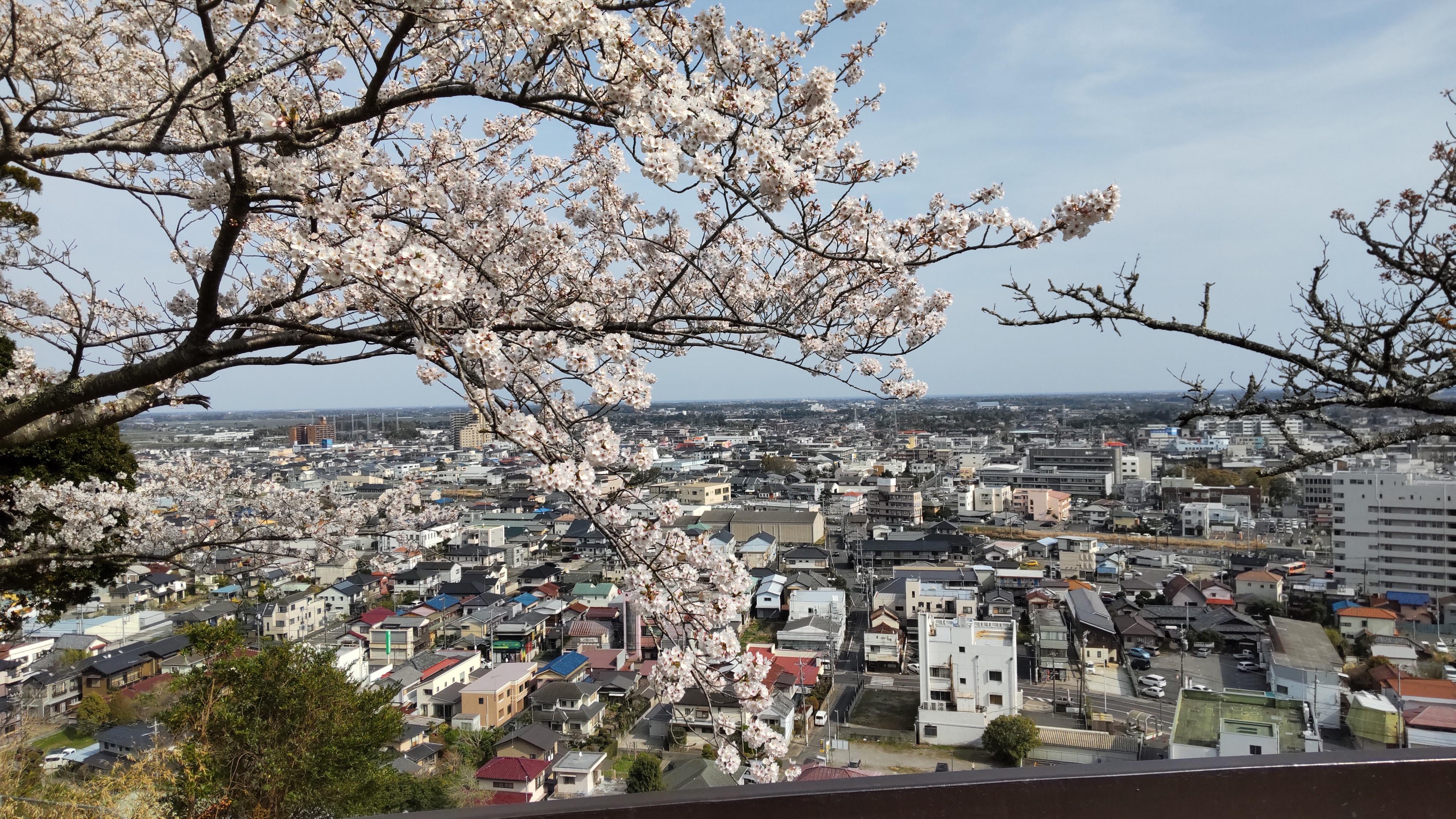 東金市山王台公園は桜の名所です。