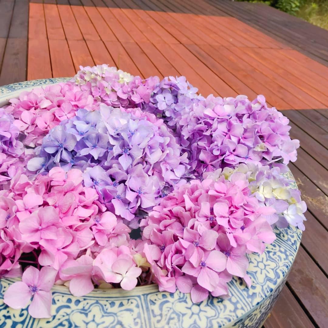 花手水 6月はあじさいが咲きます