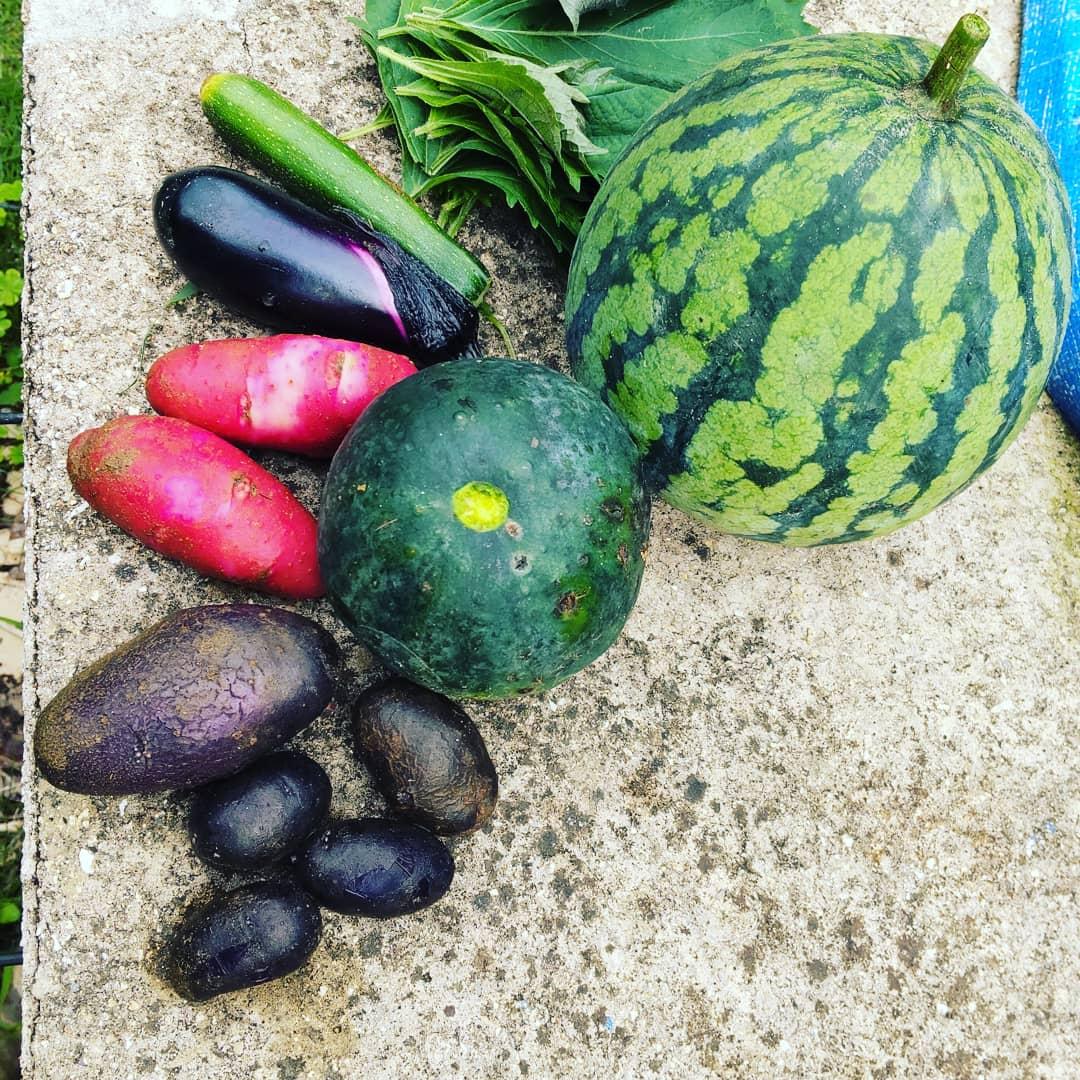 こんな野菜も採れました