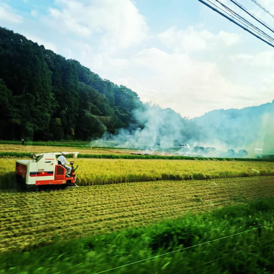 里山の稲刈り風景です。