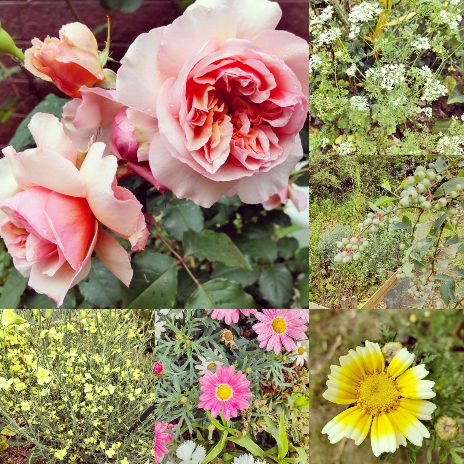 季節の花も咲きます。