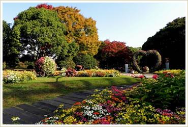 紅葉の季節の長居公園です。