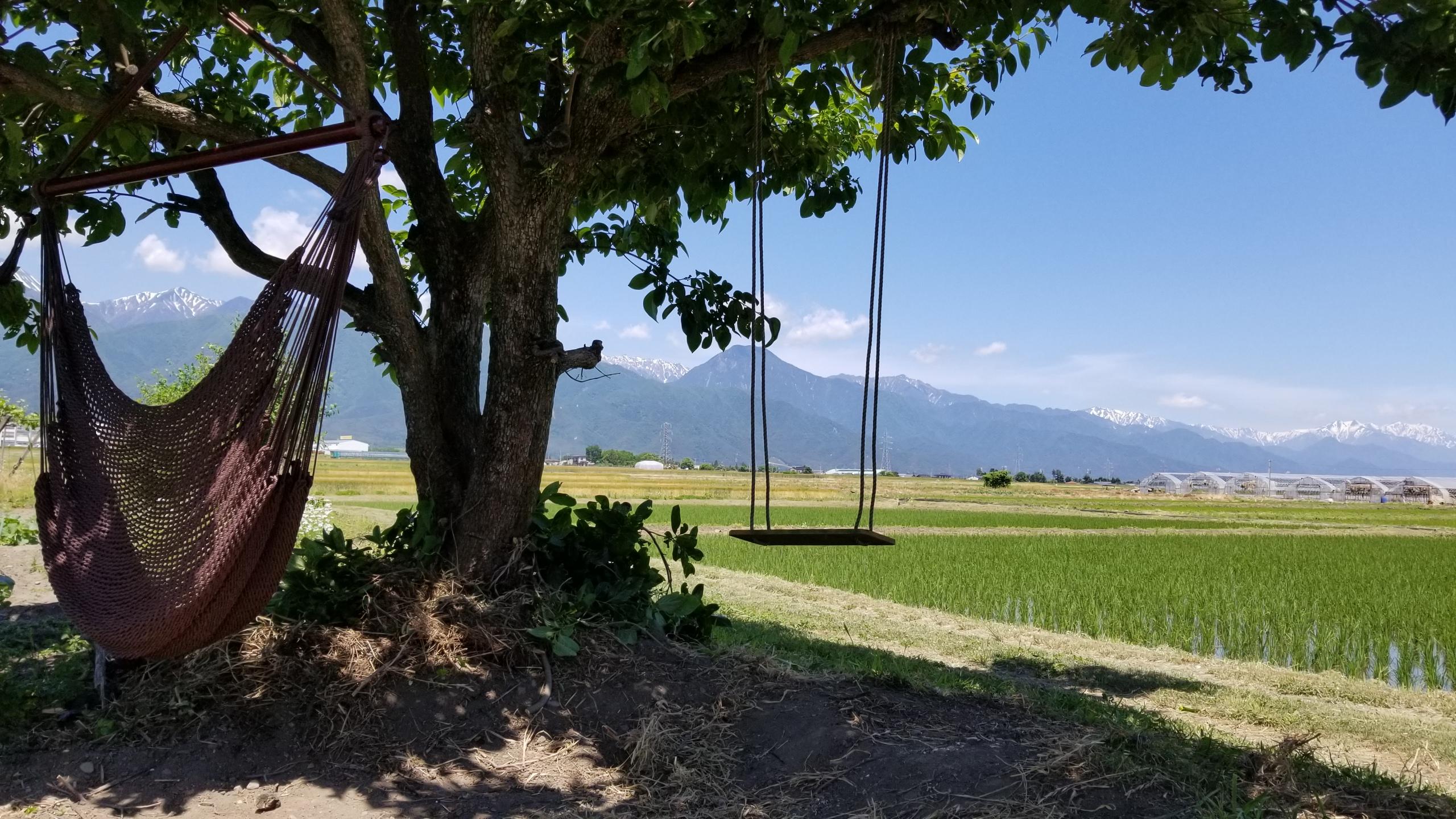 農家民宿の畑でブランコ体験