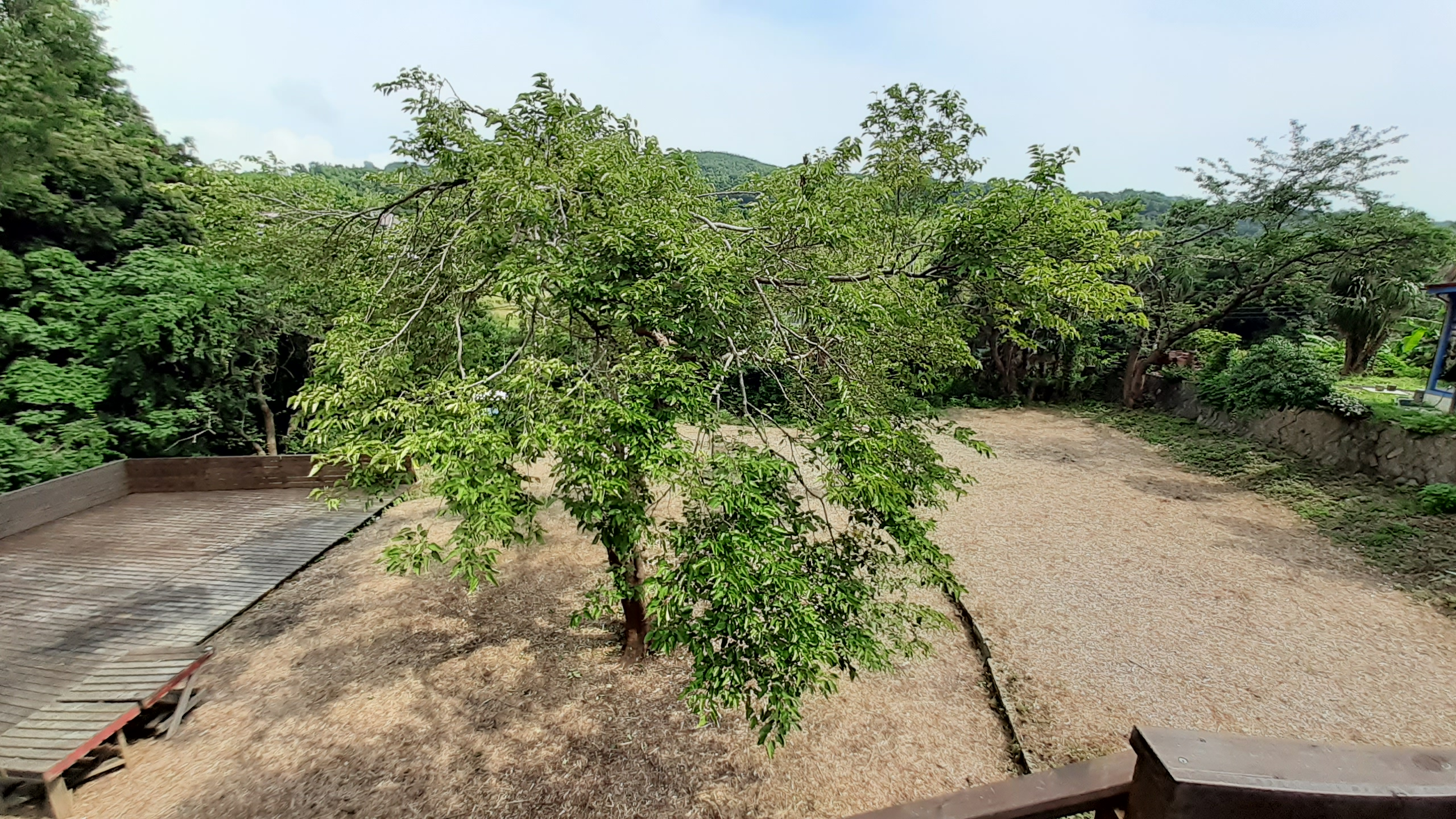 木の生えているところがウッドチップサイト、右に一段高くなったところがドッグランです。RVサイト、テントサイトご利用の方は2時間無料になります。