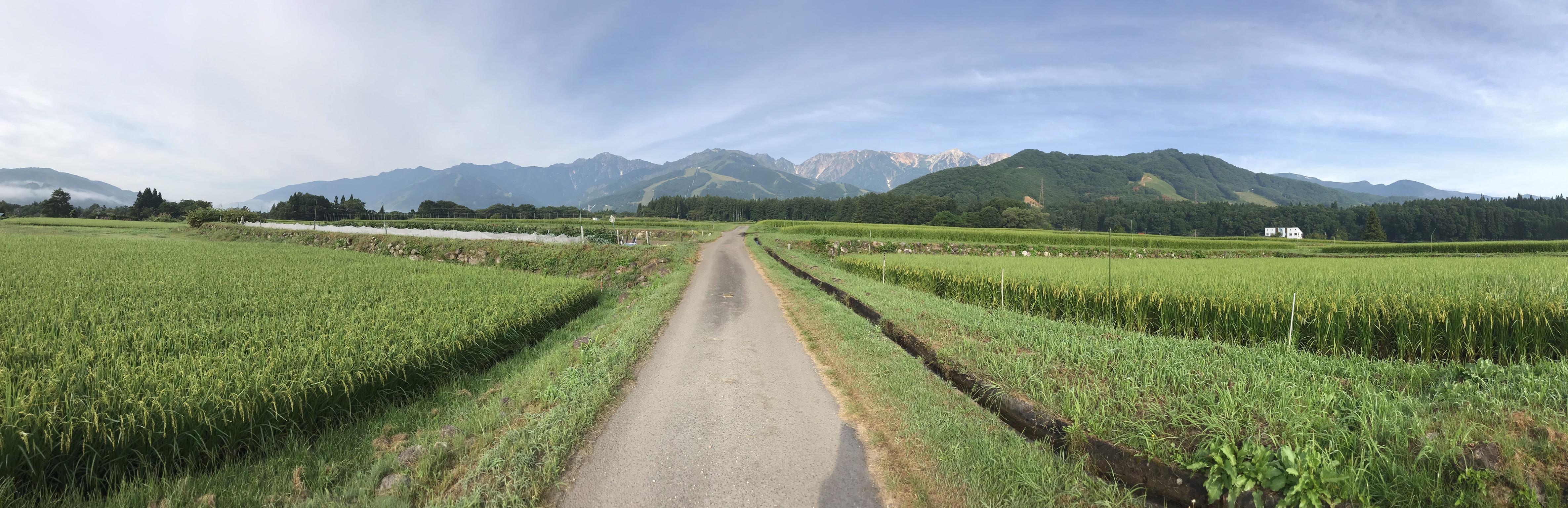 朝の里山さんぽ道