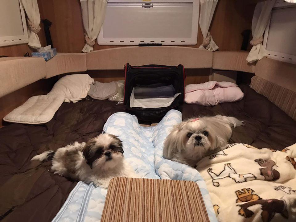 2段ベッドなどでは愛犬たちが不安という方には特におすすめです。